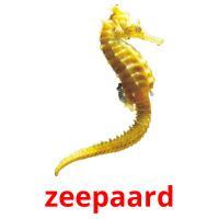zeepaard picture flashcards