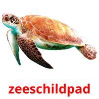 zeeschildpad picture flashcards