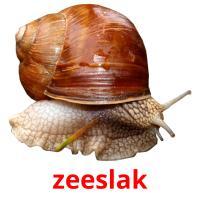 zeeslak picture flashcards