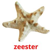 zeester picture flashcards