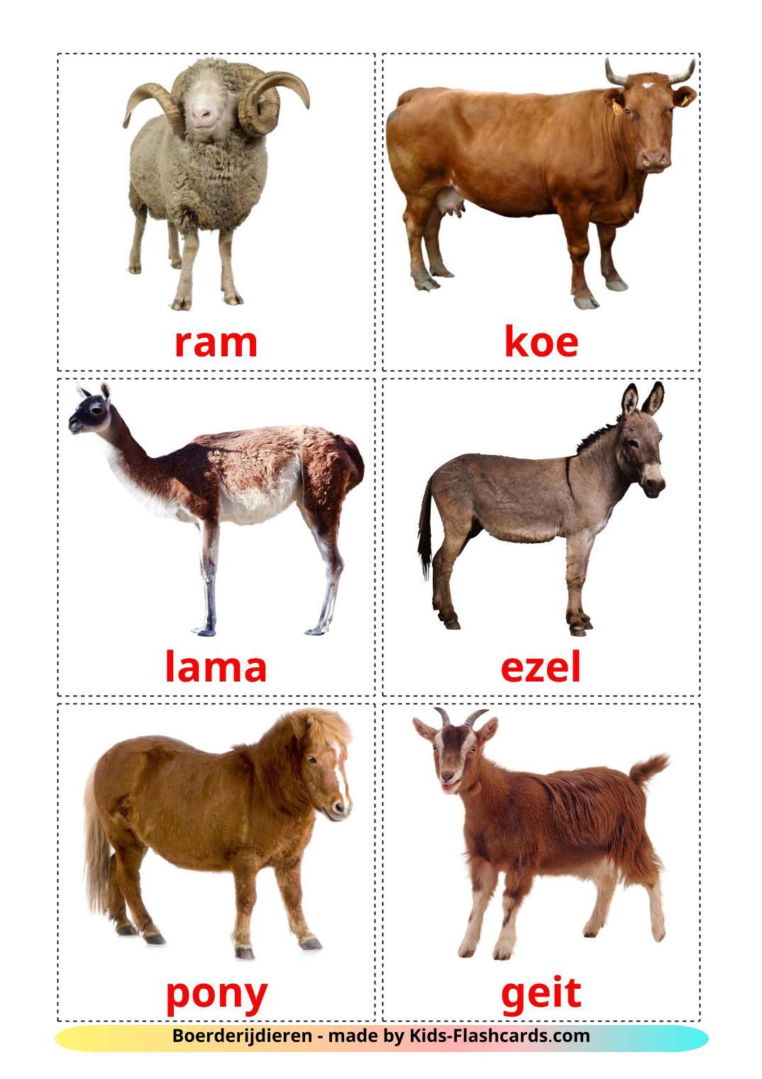 Farm animals - 15 Free Printable dutch Flashcards