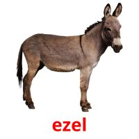 ezel picture flashcards