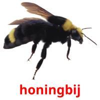 honingbij picture flashcards
