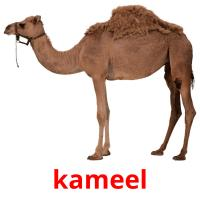 kameel picture flashcards