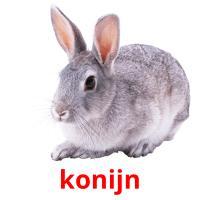 konijn picture flashcards