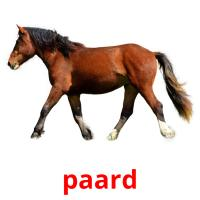 paard picture flashcards