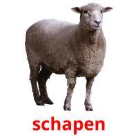 schapen picture flashcards