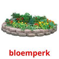 bloemperk picture flashcards