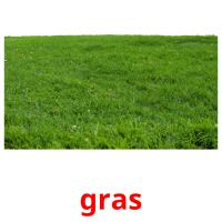 gras picture flashcards