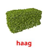 haag picture flashcards