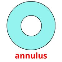 annulus picture flashcards