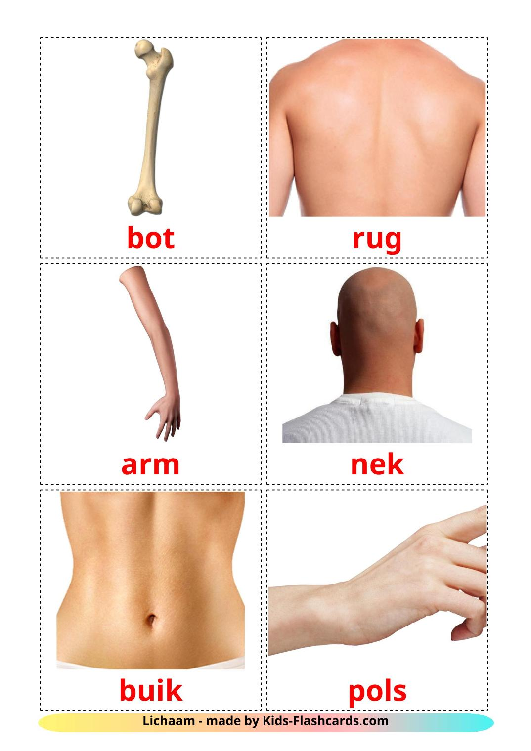 Body Parts - 26 Free Printable dutch Flashcards