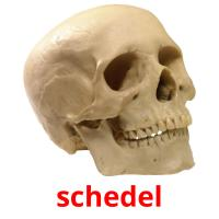 schedel picture flashcards