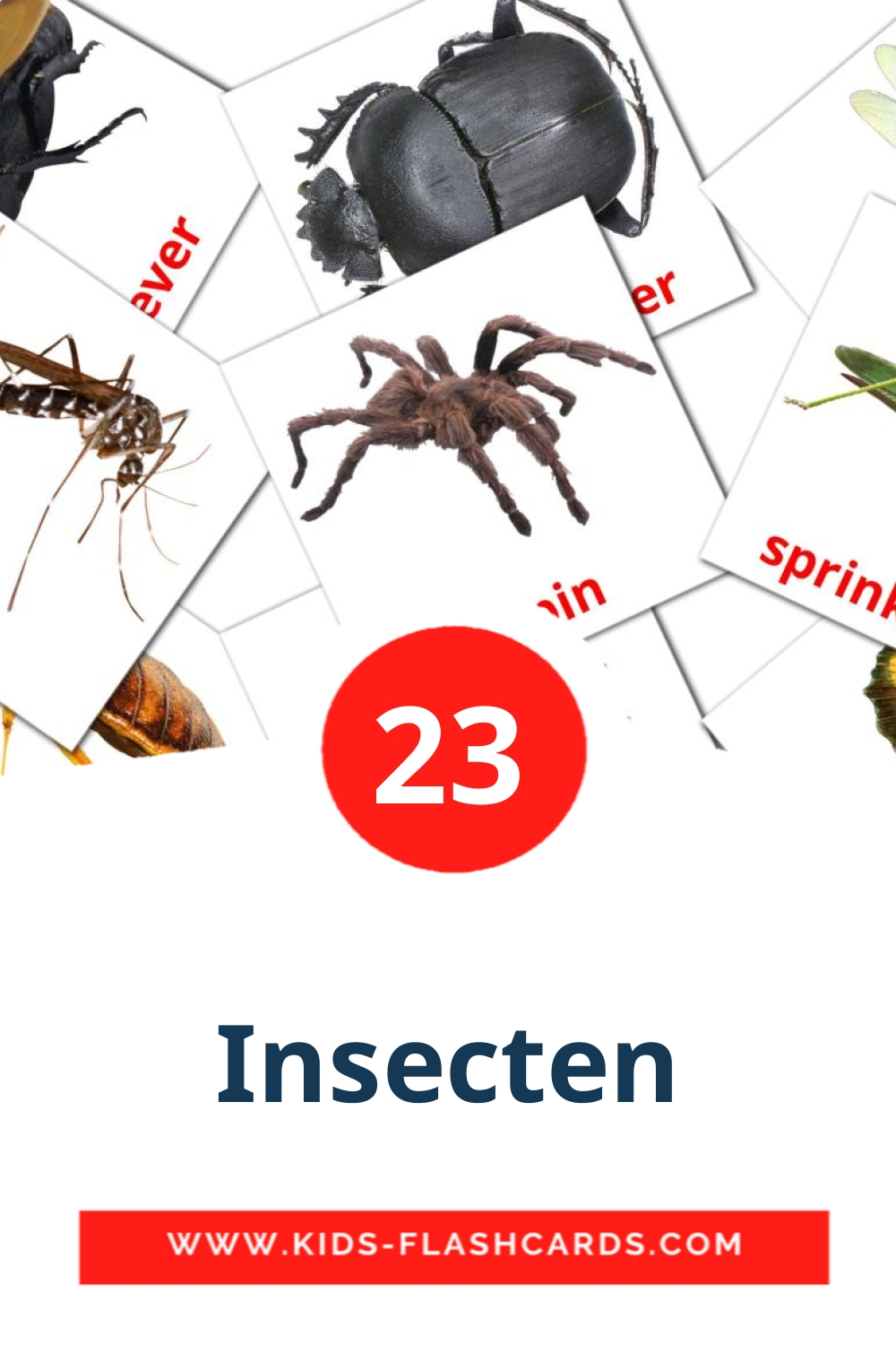 23 Insecten Picture Cards for Kindergarden in dutch