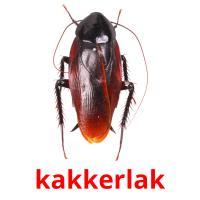 de kakkerlak picture flashcards