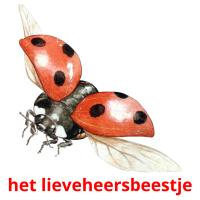 het lieveheersbeestje picture flashcards