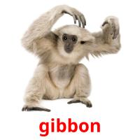 gibbon picture flashcards