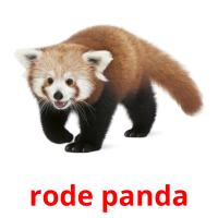 rode panda picture flashcards
