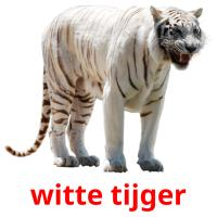 witte tijger picture flashcards