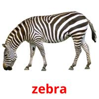 zebra picture flashcards