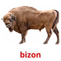 de bizon picture flashcards