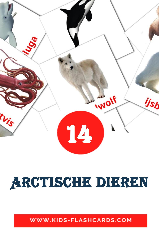 13 Arctische dieren Picture Cards for Kindergarden in dutch