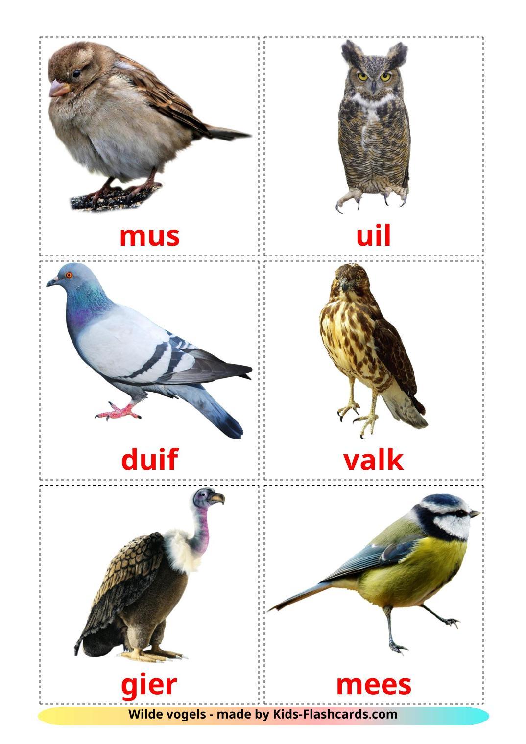 Wild birds - 18 Free Printable dutch Flashcards