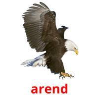 de arend picture flashcards