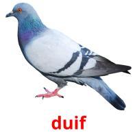 de duif picture flashcards
