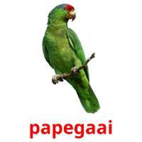 de papegaai picture flashcards