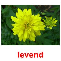 levend picture flashcards
