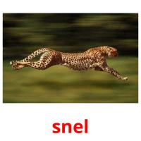 snel picture flashcards