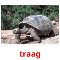 traag picture flashcards