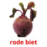 rode biet picture flashcards