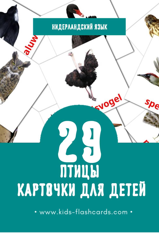 """""""Vogels"""" - Визуальный Нидерландcком Словарь для Малышей (29 картинок)"""