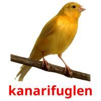 kanarifuglen picture flashcards