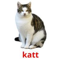 katt picture flashcards