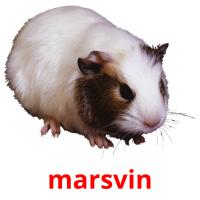 marsvin picture flashcards