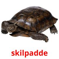 skilpadde picture flashcards