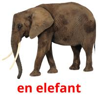 en elefant picture flashcards