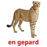 en gepard picture flashcards