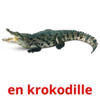 en krokodille picture flashcards
