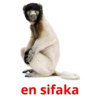 en sifaka picture flashcards