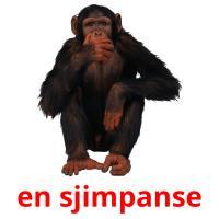en sjimpanse picture flashcards