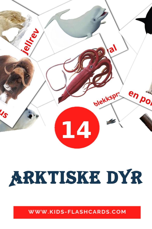 14 Arktiske dyr Picture Cards for Kindergarden in norwegian