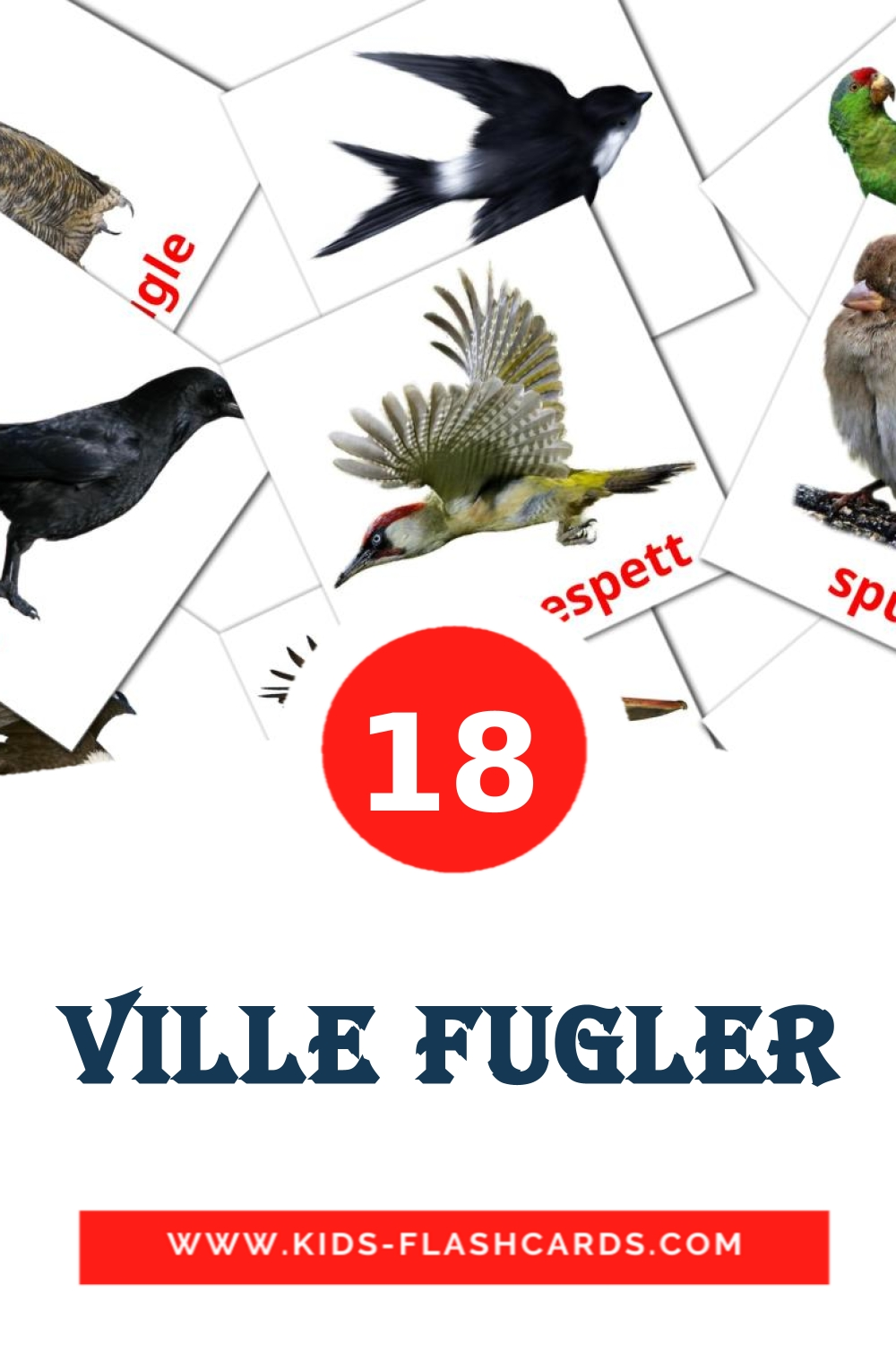 18 Ville fugler Picture Cards for Kindergarden in norwegian