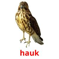 hauk picture flashcards