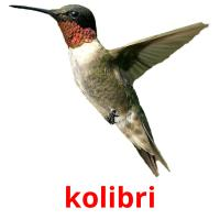 kolibri picture flashcards