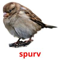 spurv picture flashcards