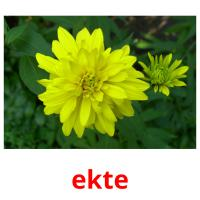 ekte picture flashcards
